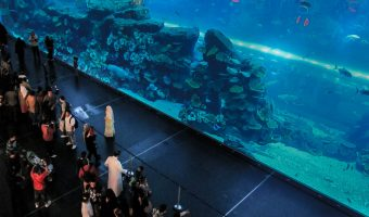 Shoppers looking at the fish in the Dubai Aquarium at the Dubai Mall