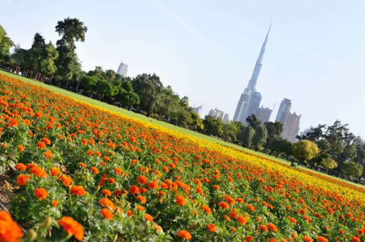 View of the Burj Khalifa from Safa Park